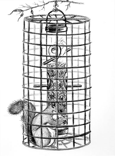 CageRedSquirrel.jpg (388×525)
