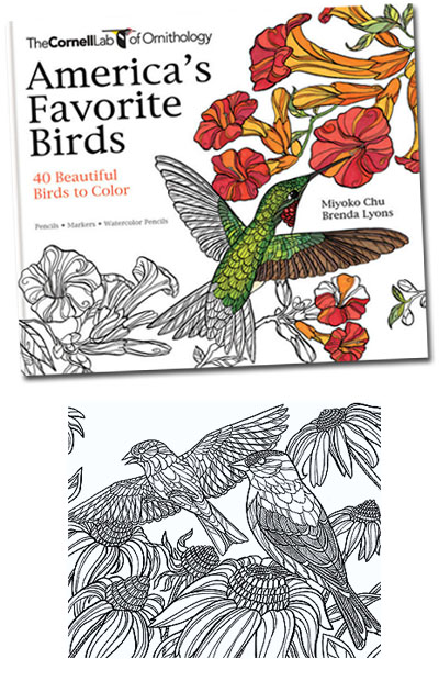 By The Cornell Lab Or Ornithology 40 Favorite Birds Adult Coloring Book Heavy Stock Pages For Pencil Markers Watercolor Off White Better