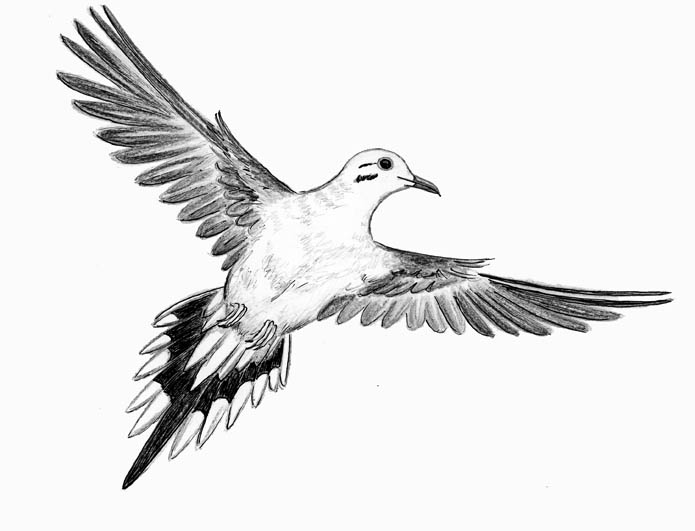 how to keep mourning doves away
